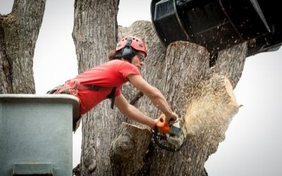 Tree Removal in Slidell